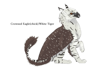 Crowned Eagle / White Tiger