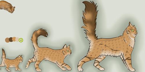 *sold* Tan Kitten Adoptable