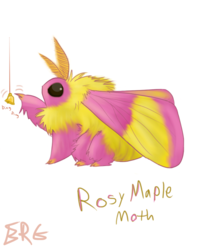 Fluffity Rosy Maple Moth