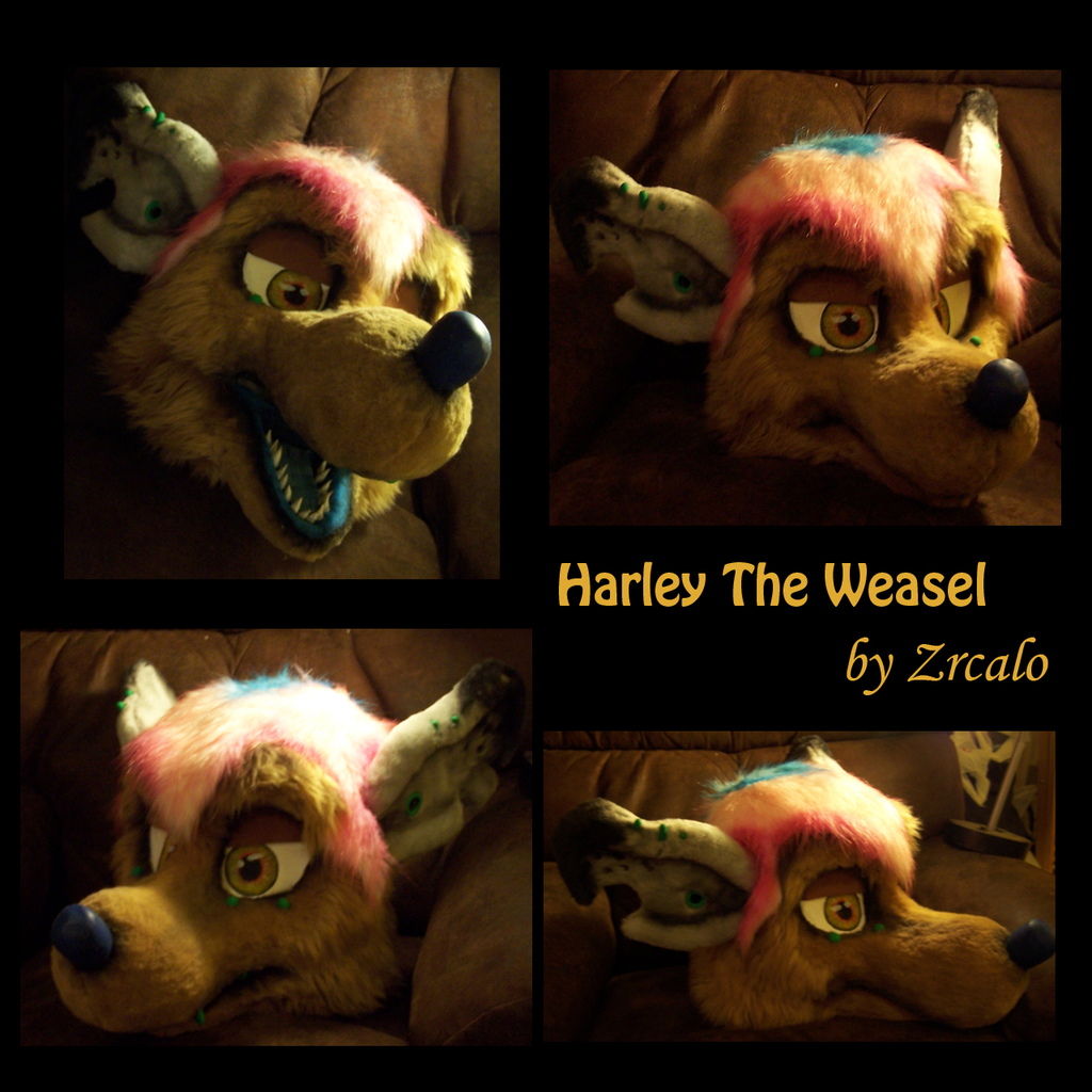 Harley the weasel finished fursuit head