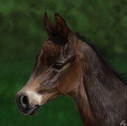 Foal study