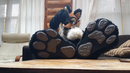Respect THESE paws