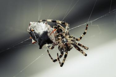 2014 - Spider