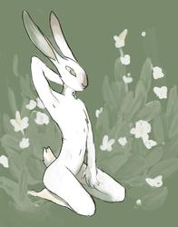 flowery boy