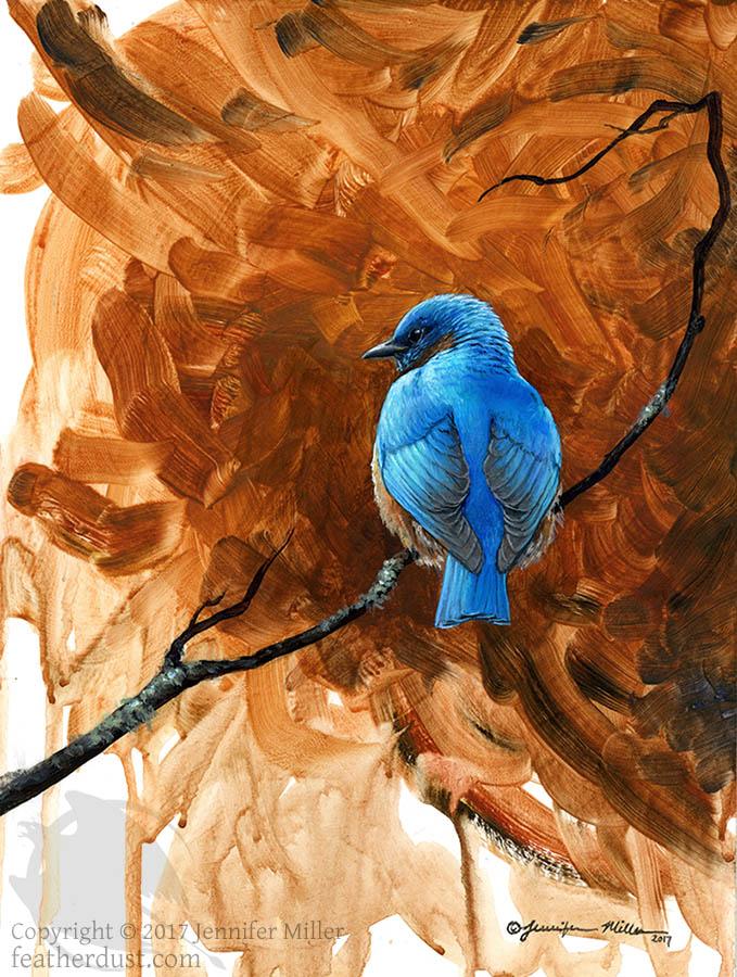 Most recent image: Bluebird Study