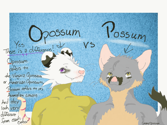 Opossum Facts with Milo