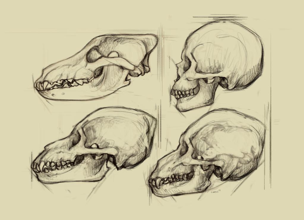 Most recent image: Werewolf Skull studies