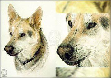 CsVxNI dog A4 Portrait