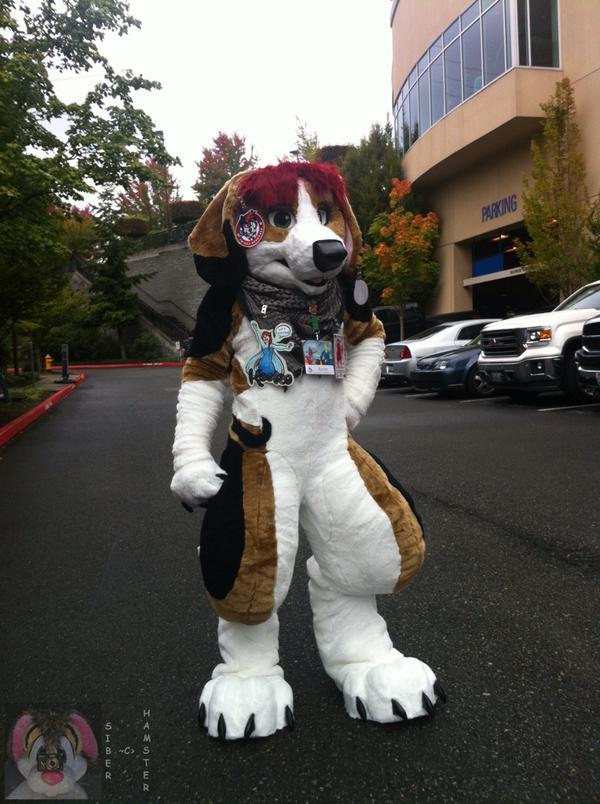 The beagle has arrived~