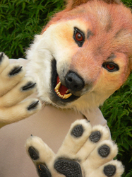Shibu Inu realistic partial, part 3 of 6