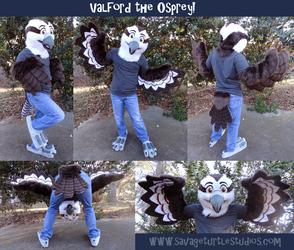 Valeford the Osprey -- 2013