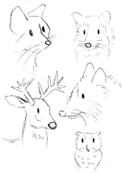 lil critters