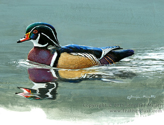 Little Wood Duck