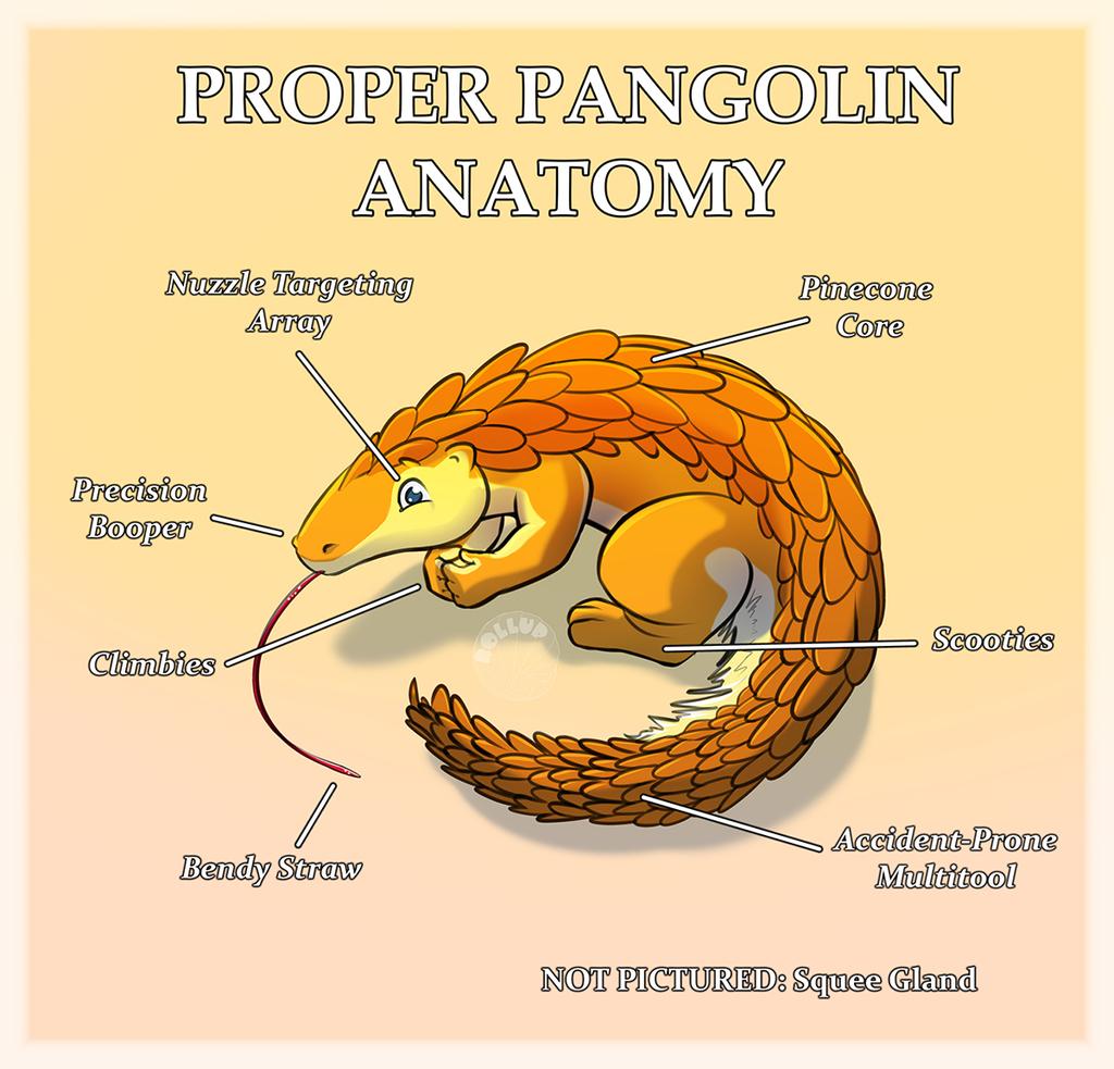 Proper Pangolin Anatomy