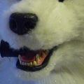 Glitter Wolf Head