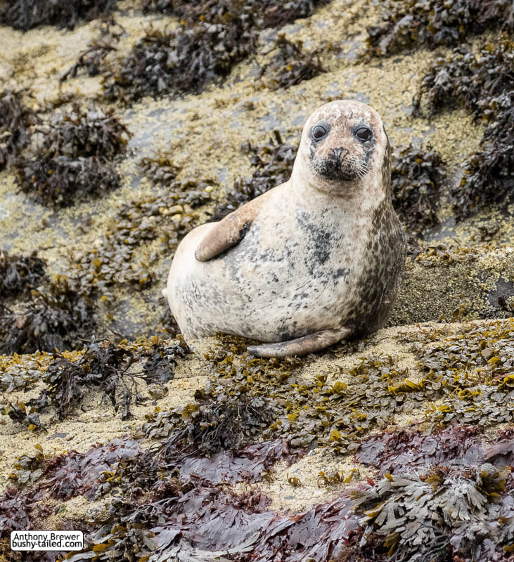 Seal poses on a rock