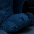 Jakku's paws at night