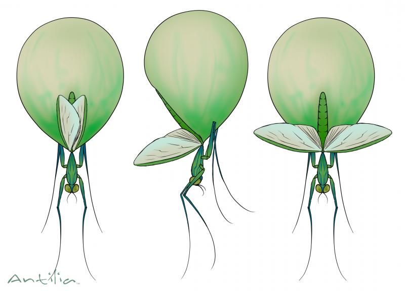 Antilia Concept--Unnamed bug  #2