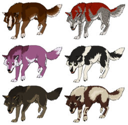 Wolf adopts - 6/6 available