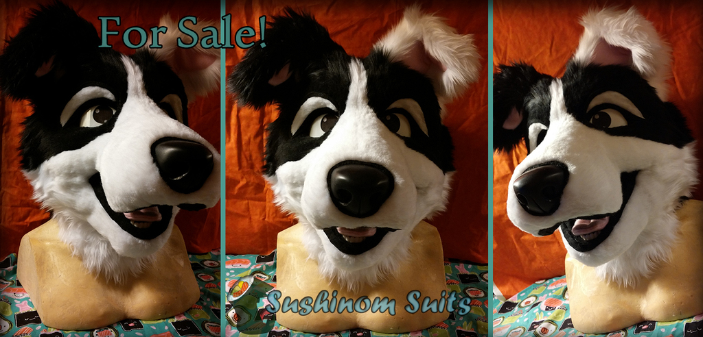 Most recent image: Collie Pup Looking for a Home!