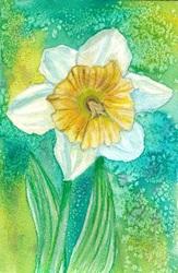 WC 9: Daffodil