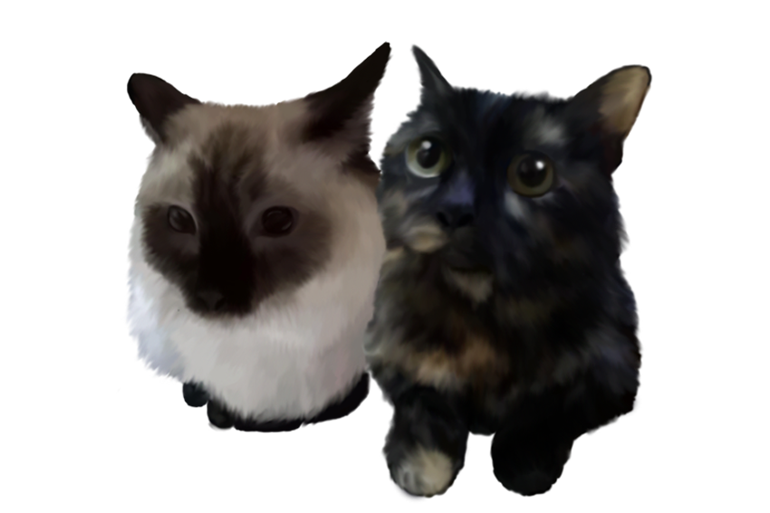 Most recent image: Cats