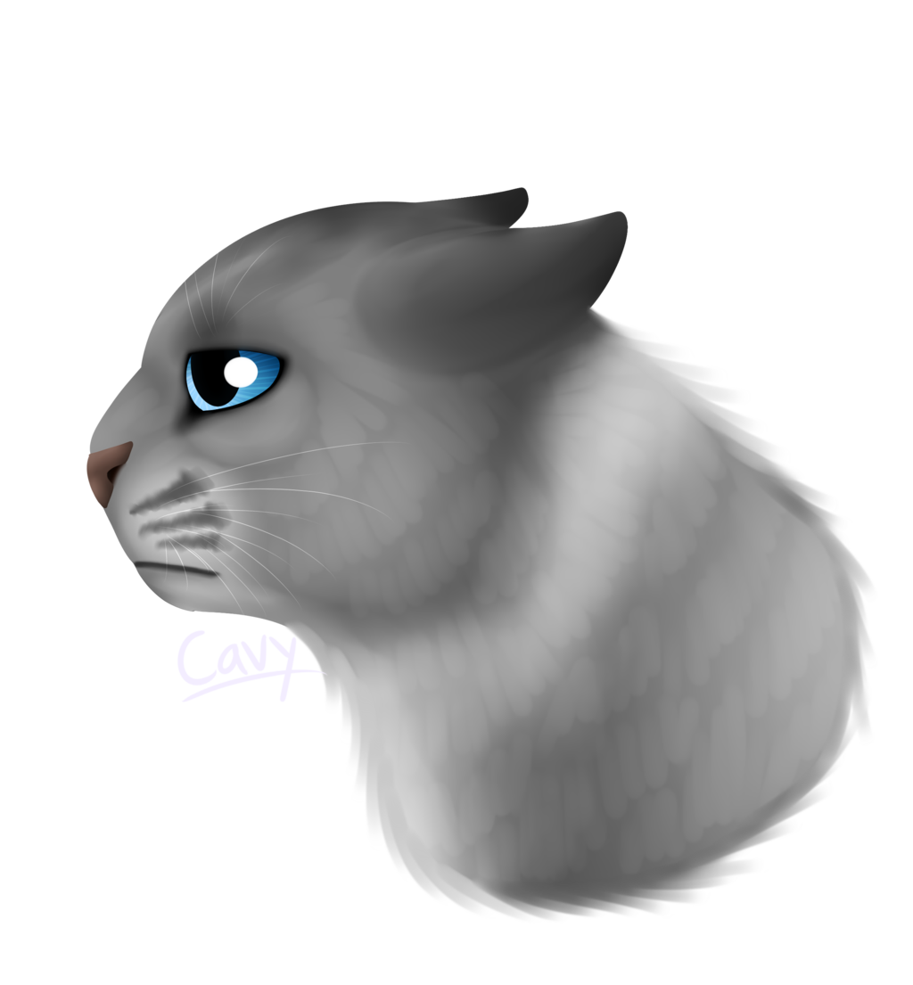 Generic Sad Cat.Png