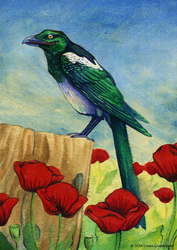 Perched Above Poppies