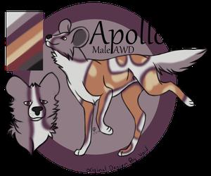 Apollo Reference Sheet