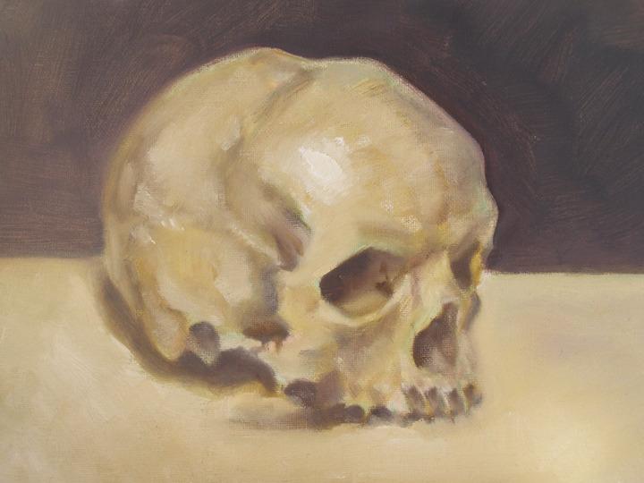 skull still life study