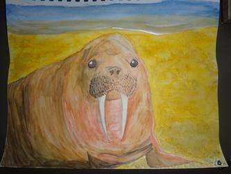 Walrus Watercolor