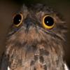 avatar of MaskedOttsel