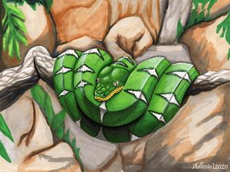 Emerald Tree Boa - Artists for the Amazon