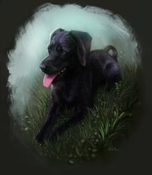 Mr. B - Pet Portrait