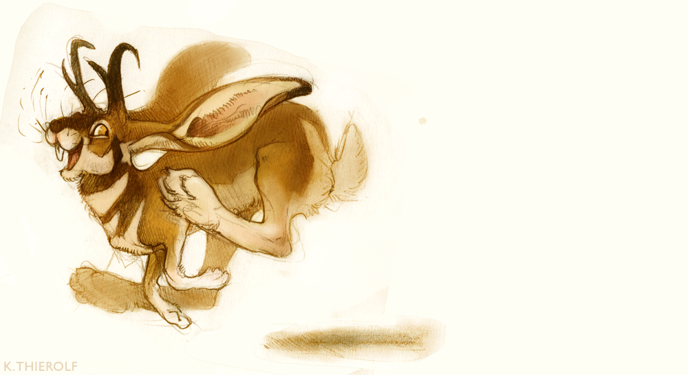 Sketch Dailies - Jackalope