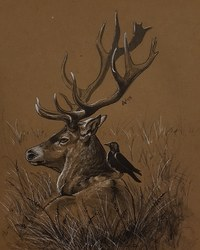 WBS: Stag
