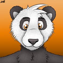 Panda Paco portrait