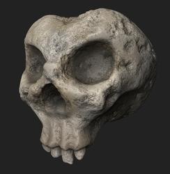 A skull