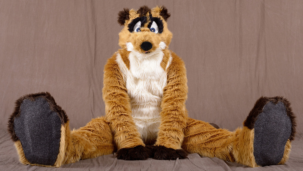 Meerkat ready to play!
