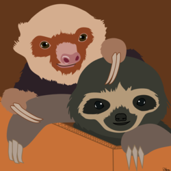 Baby sloths!