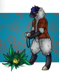 Tourist Sheep By Jynx