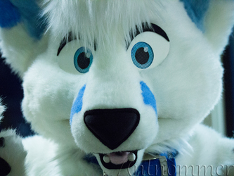 Folf In Your Face