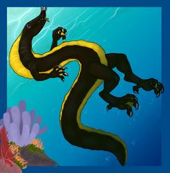 Black Ribbon Eel Dragon