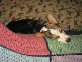 Sleeeepy Sobe