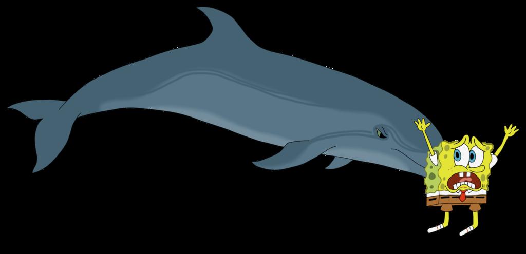 A bottlenose dolphin sponging