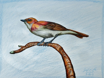 Flame-backed Warbler--Fantasy Fauna