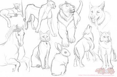 Practice: Animals