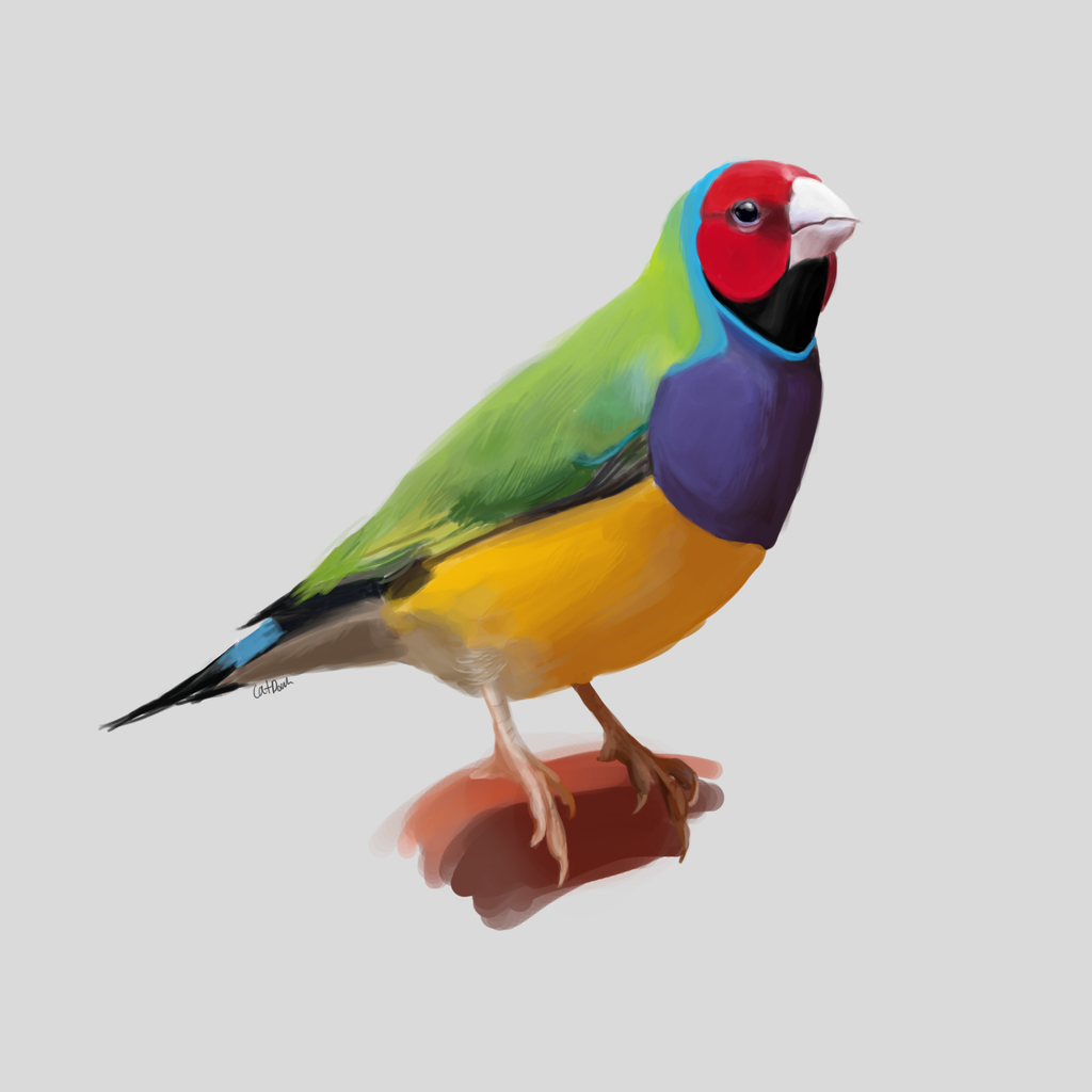 Most recent image: Gouldian Finch