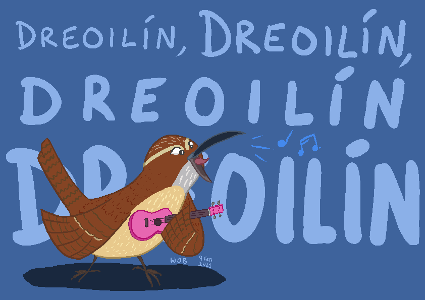 Most recent image: Dreoilín