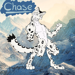 Chase the Snow Leopard